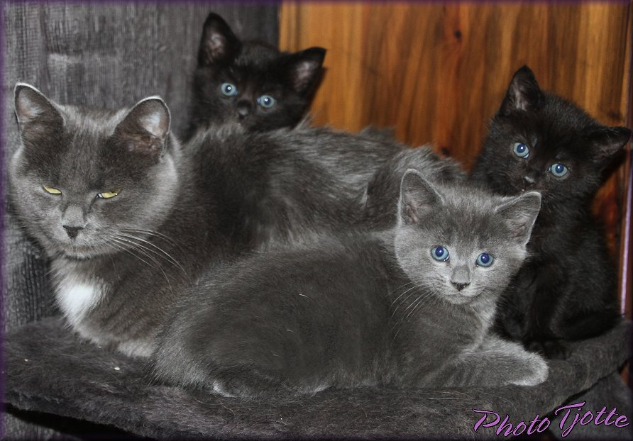 Kittens for sale,,